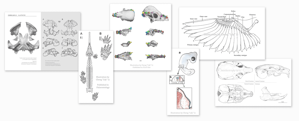 illustration-banner-lilycli.png
