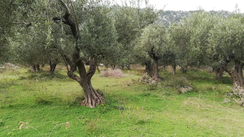 Land close to Glysteri beach    Property number 311    Price: euro 90.000    Read more