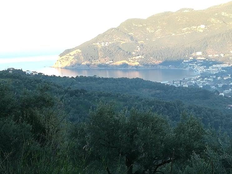 land with amazing view over Skopelos    Property number 313    Price: euro 100.000     Read more