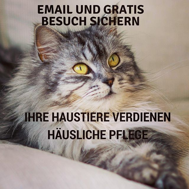 Email : tito@hugapet.de  Mit Hug a Pet, nie wieder zum Tierärztliche Klinik #witzig #witzigebilder #sommer #katze #süss #dog #hunde #cat #catsofinstagram #reisenmitkindern #family #cats_of_instagram #dogsofinsta #dogsofinstgram #berlin #Xberg #hauptstadthund #instahund #strassenhund
