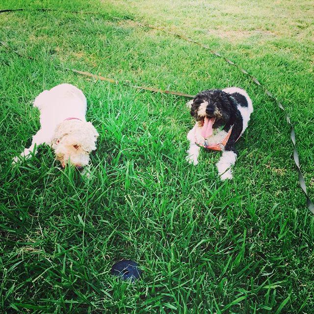 Check us out on Facebook! www.facebook.com/hugapet.de/  Mit Hug a Pet, nie wieder zum Tierärztliche Klinik #witzig #witzigebilder #sommer #katze #süss #dog #hunde #cat #catsofinstagram #reisenmitkindern #family #cats_of_instagram #dogsofinsta #dogsofinstgram #berlin #Xberg #hauptstadthund #instahund #strassenhund