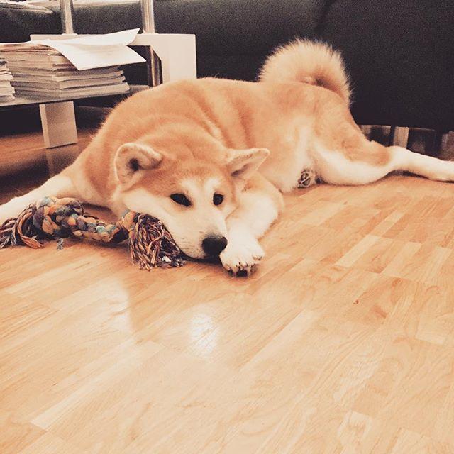 Check us out on : https://m.facebook.com/hugapet.de/?ref=aymt_homepage_panel Mit Hug a Pet, nie wieder zum Tierärztliche Klinik #witzig #witzigebilder #sommer #katze #süss #dog #hunde #cat #catsofinstagram #reisenmitkindern #family #cats_of_instagram #dogsofinsta #dogsofinstgram #berlin #Xberg #hauptstadthund #instahund #strassenhund
