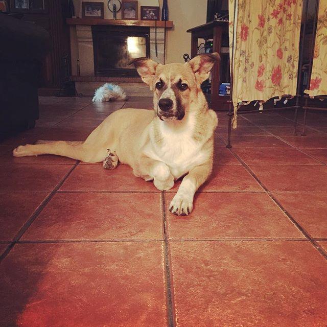 Check us out on Facebook! @hugapet.de  Mit Hug a Pet, nie wieder zum Tierärztliche Klinik #witzig #witzigebilder #sommer #katze #süss #dog #hunde #cat #catsofinstagram #reisenmitkindern #family #cats_of_instagram #dogsofinsta #dogsofinstgram #berlin #Xberg #hauptstadthund #instahund #strassenhund