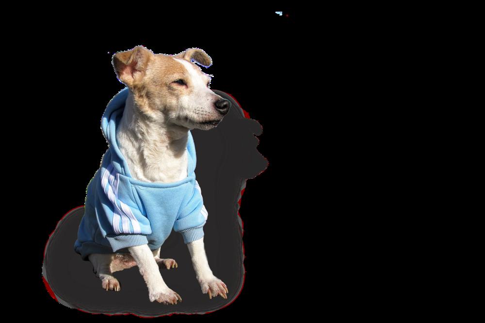 Hi, wir sindHUG A PET - Werden Sie Teil der Plattform für mobile Tierärzte und erreichen Sie mit uns mehr Kunden!