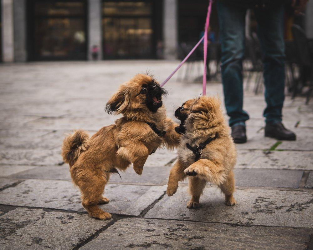 hug-a-pet-tierärztliche-Beratungskosten.jpg
