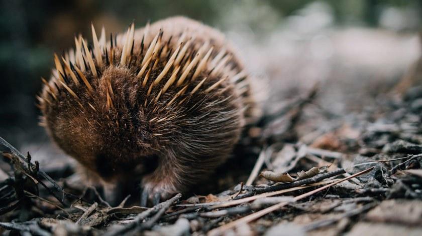 Gabriel-Veit-Tasmania-016.jpg