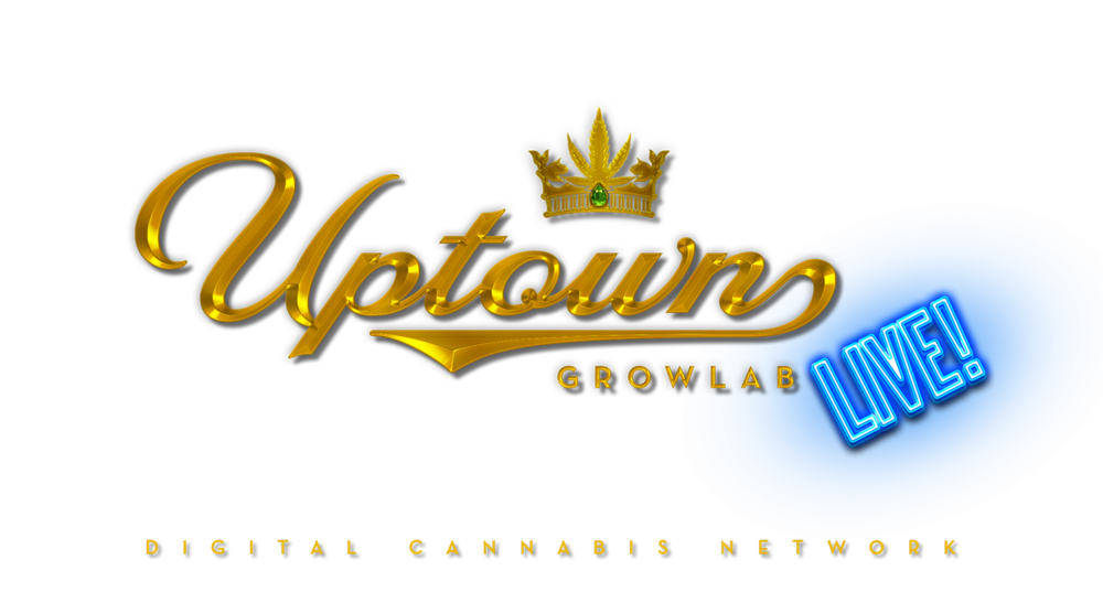 NEW CONTENT VIDEOS — Uptown Growlab Live - Digital Cannabis