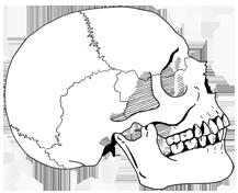 LSkull.png