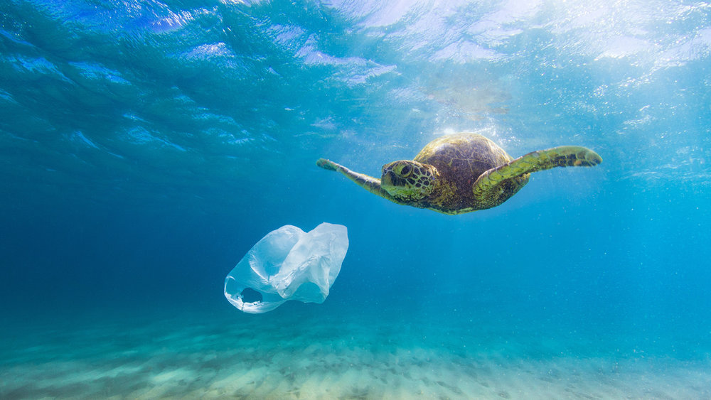 Sea Turtles Don't know the difference between jellyfish and plastic bags….