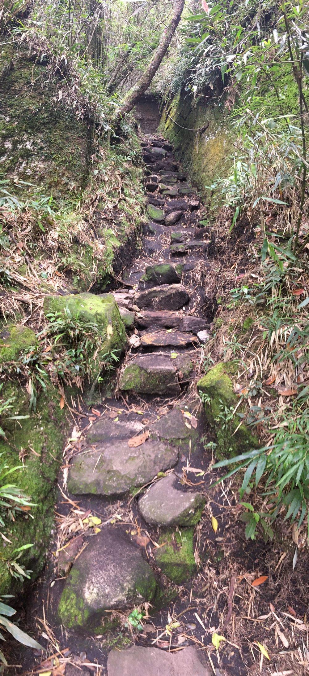 Hobbit Walk Way