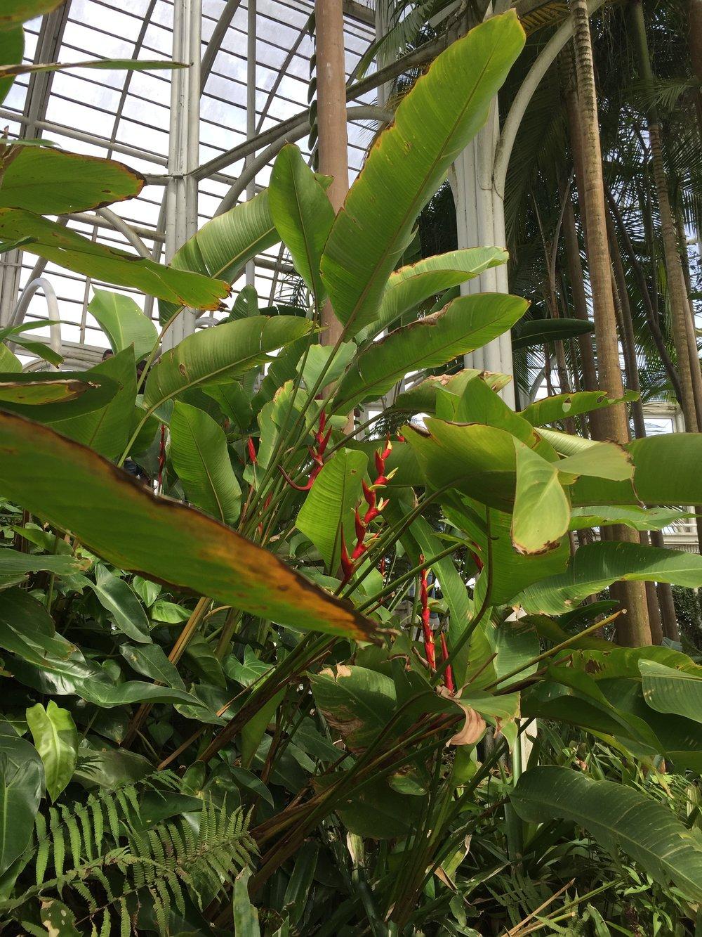 Jardim Botanico_green house