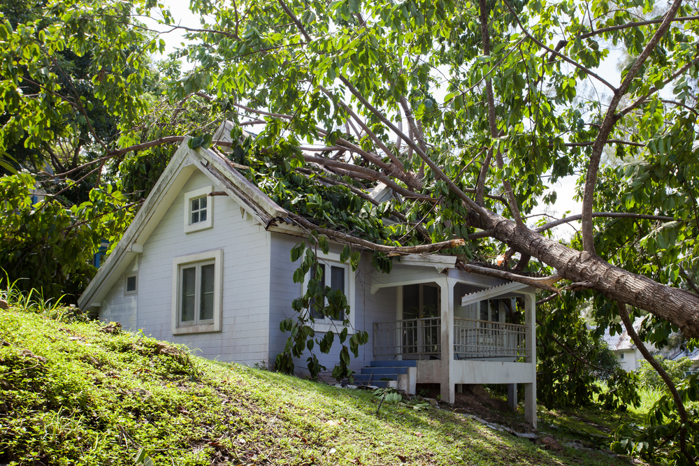 does-insurance-cover-tree-damage.jpg