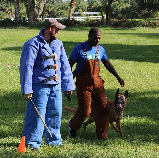 Happy Training Tuesday, Folks. __________________  #psa #decoy #malinois #belgianshepherd #belgianmalinois #malinoispuppy #malinoisofinstagram #maligator #malinoislovers #malinoisofficial #malinoisworld #germanshepherd #gsd #gsdofinstagram #WHK9 #dogtraining #dogtrainer #dogsoforlando #protection #k9 #rawfed #rawfeddog #rawfood #carnivorediet #rawfeedingcommunity #petnutrition #servicedog #obediencetraining #instadog