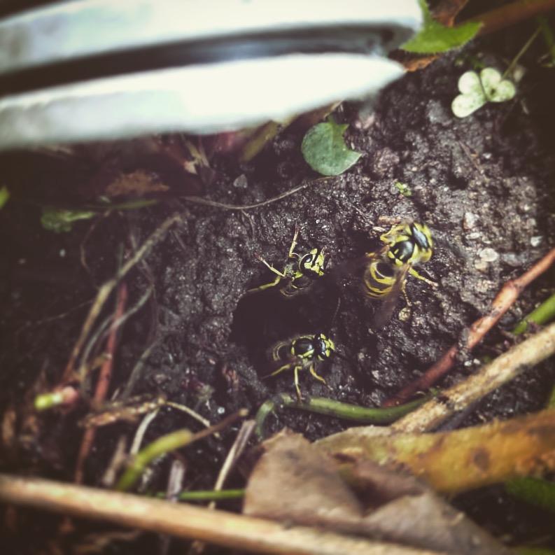 In-ground Nest