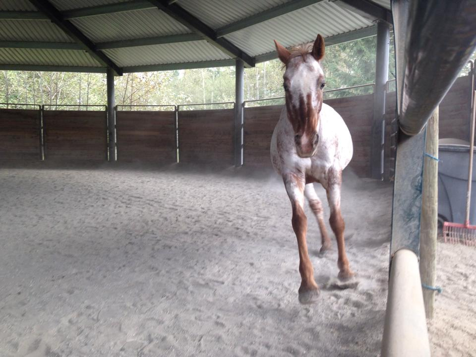 pinto horsemanship.jpg