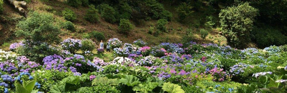 Moreflowers-1024x332.jpg