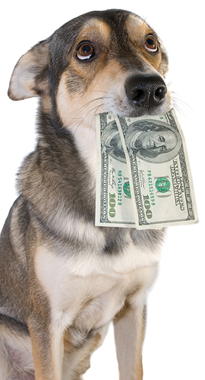 DogWithMoney_WebReady.jpg