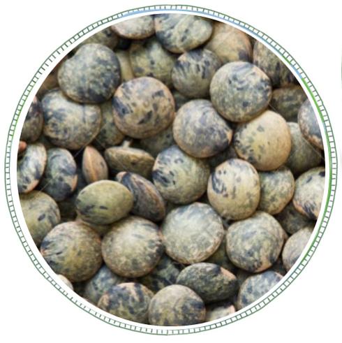 Dark Speckled Lentils (Puy) -