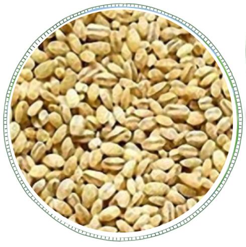 Pearl Barley -