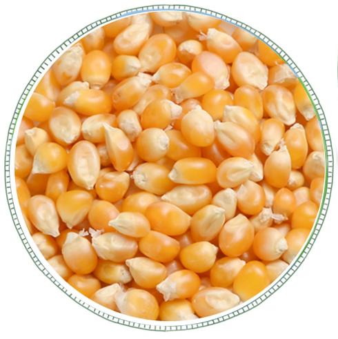 Popping Corn -