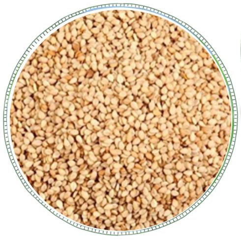 Sesame Seeds -