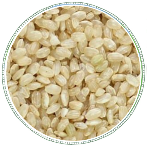 Short Grain Brown Rice -