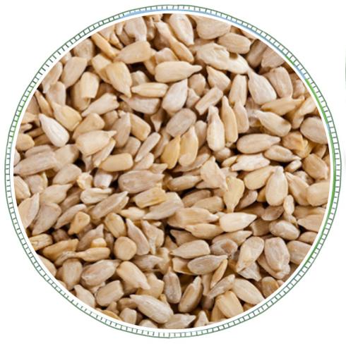 Sunflower Seeds -
