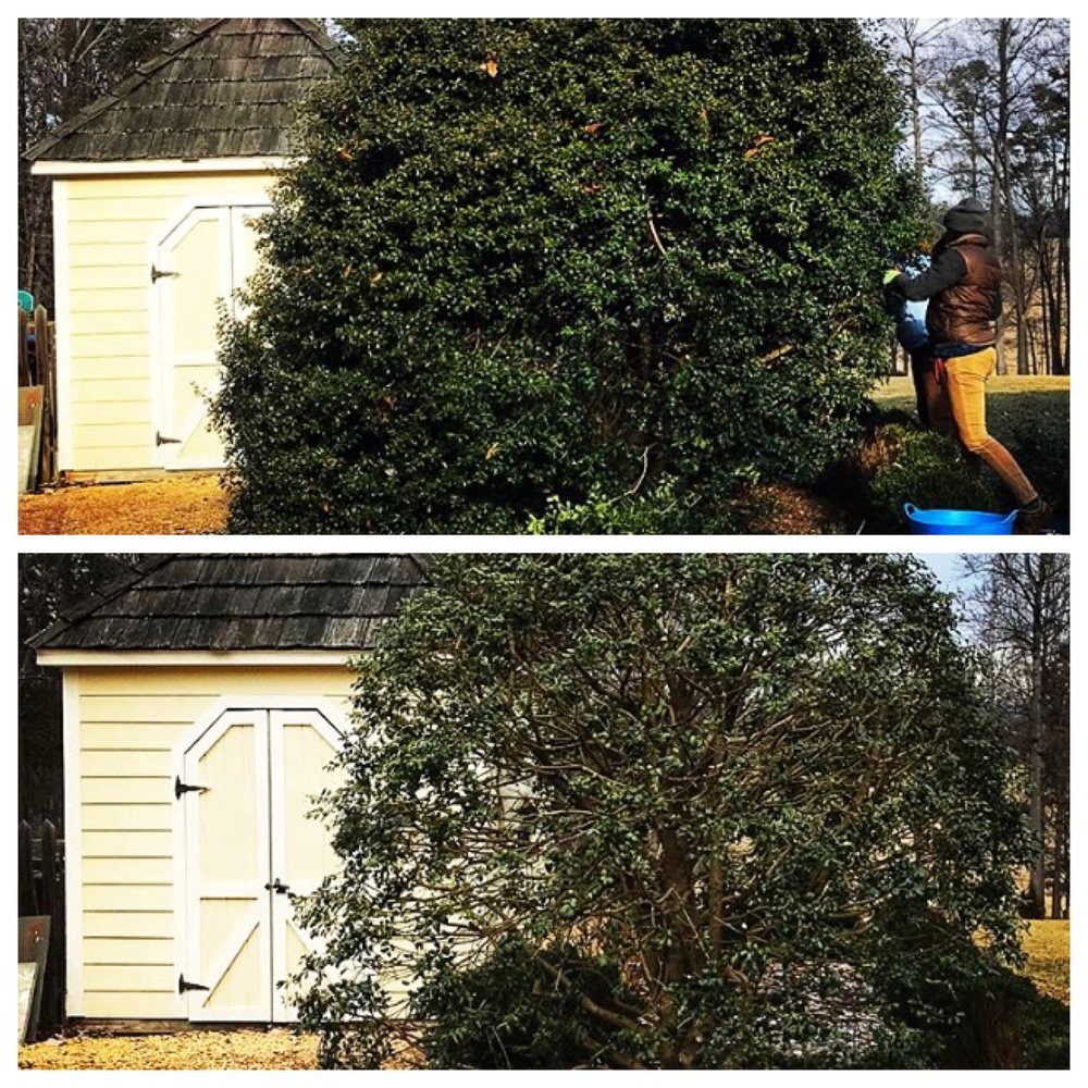 ogens before and after pruning.JPG