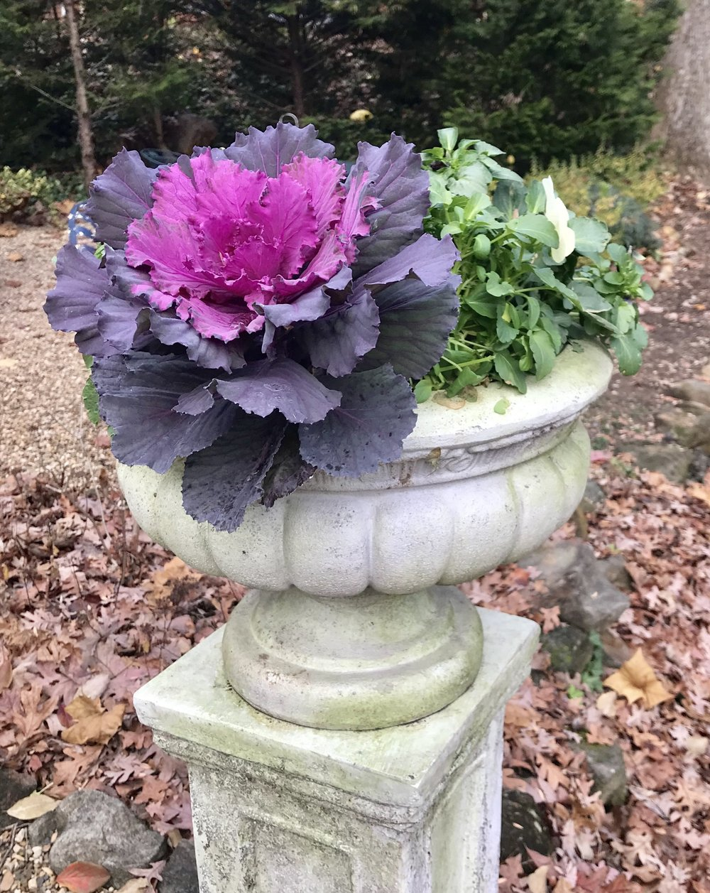 Pansies will last until next April for us here in Virginia. That ornamental kale will probably be a bit mushy after a couple of months, but it's still a pretty good option
