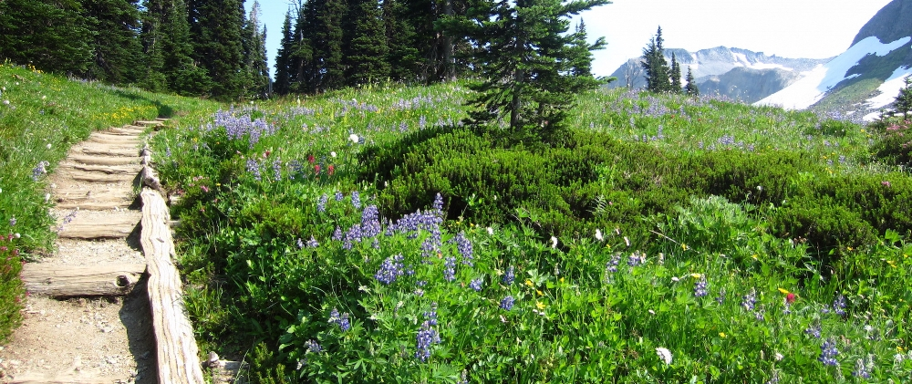 A dirt path surrounded by wildflowers with trees and a mountain in the distance