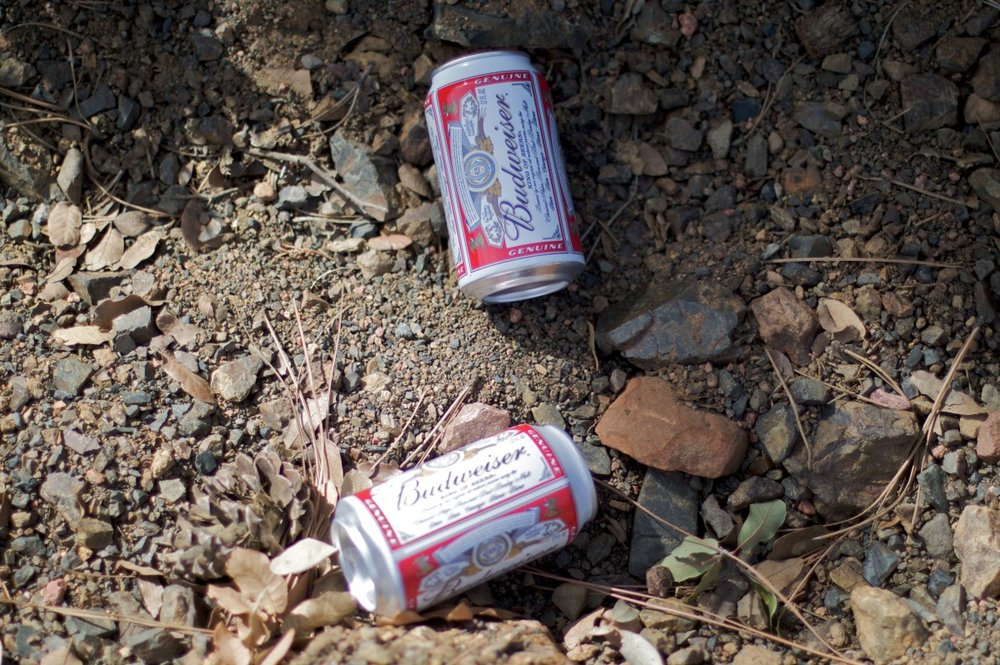Empty beer can trash left on a forest floor