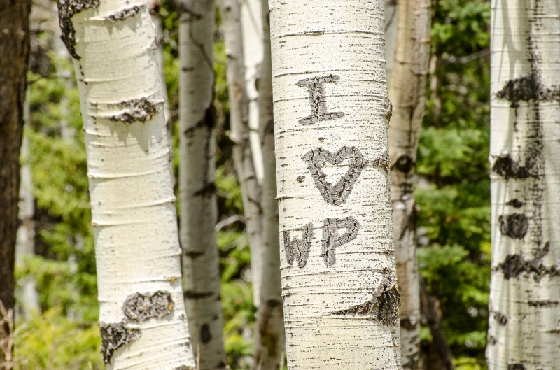 Initial carved into a living aspen tree bark.