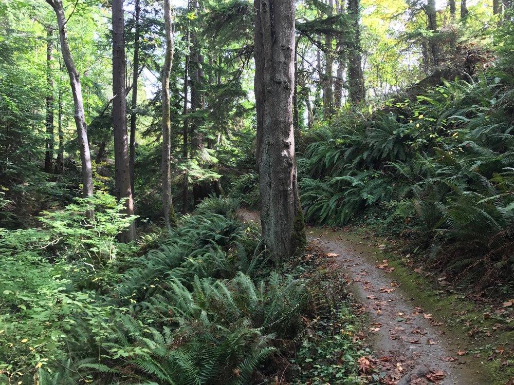 A dirt trail winds through a lush green forest.