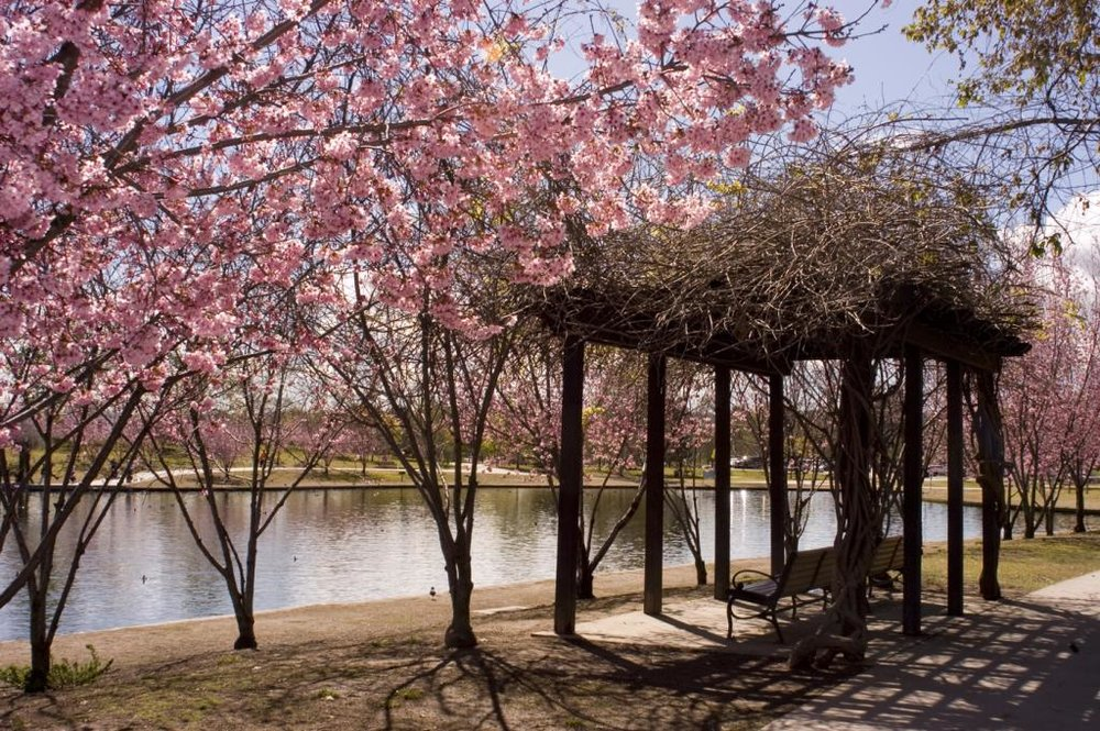 Credits: Lake Balboa Go to Lake Balboa during the right season with our Mechanical Bull and see the Cherry Trees Blossom while you conquer a Bull.