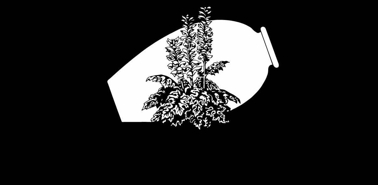 What is Mediterranean Gardening? — South Australian Mediterranean