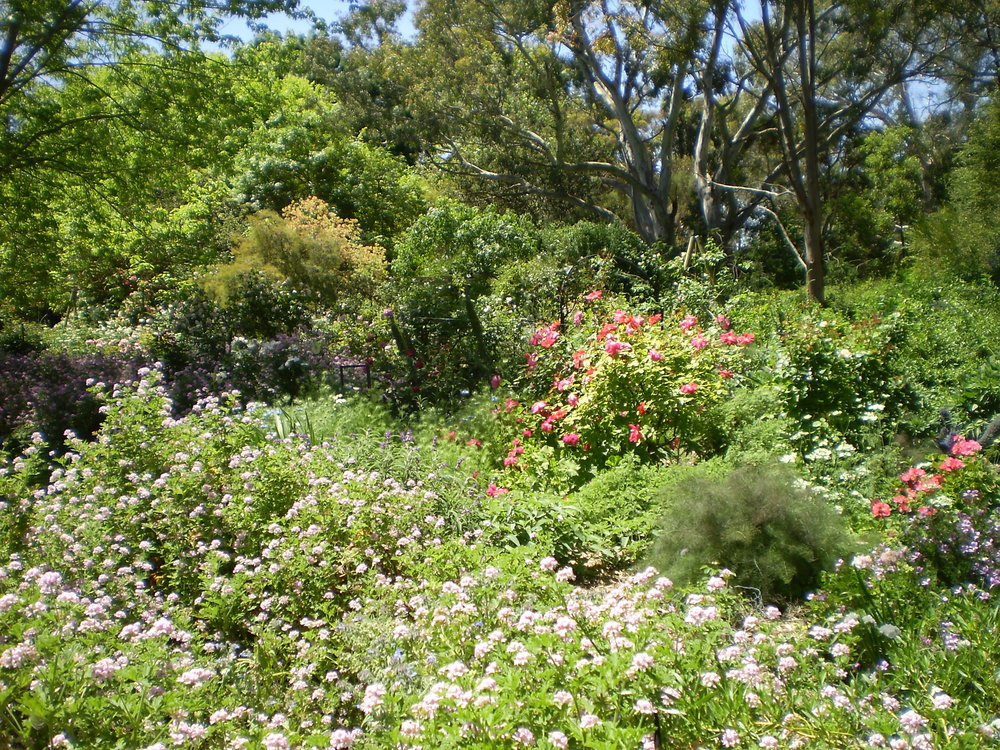 Perennial and Shrub Borders at Avondale Garden