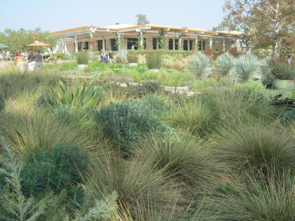 INTERNATIONAL Mediterranean garden society -