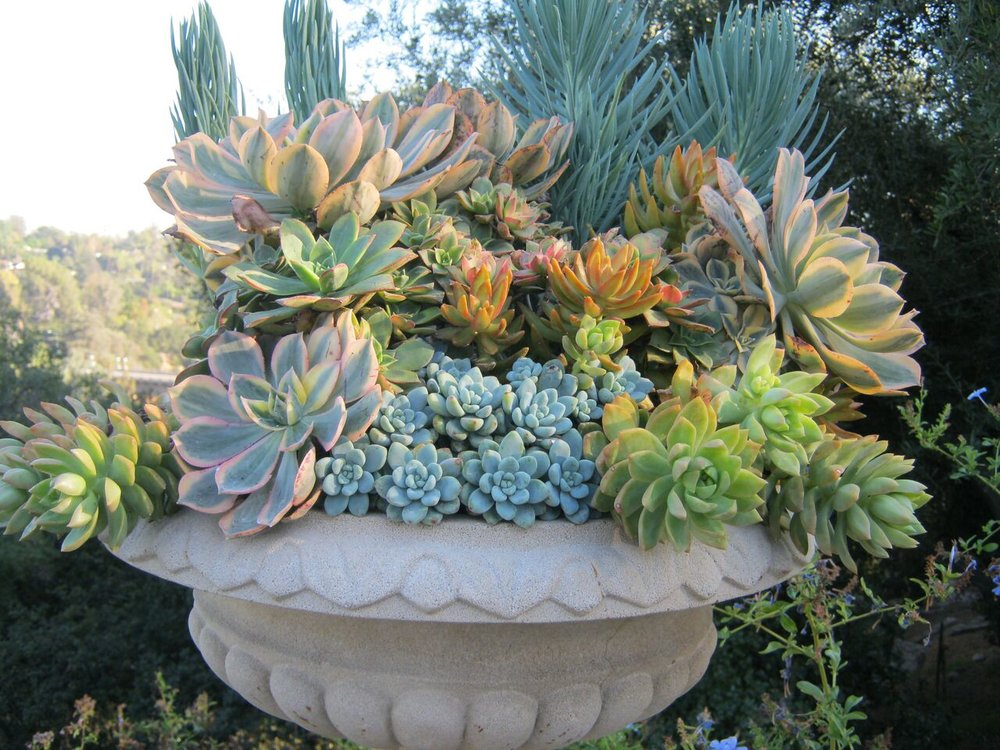 Succulent Extravaganza MGS Conference Garden Cal 2017