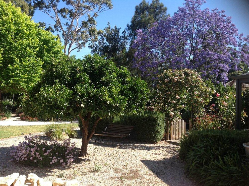 Adelaide Backyard Jacaranda Citrus Garden
