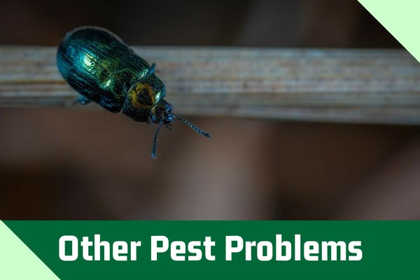 Other Pest Problems
