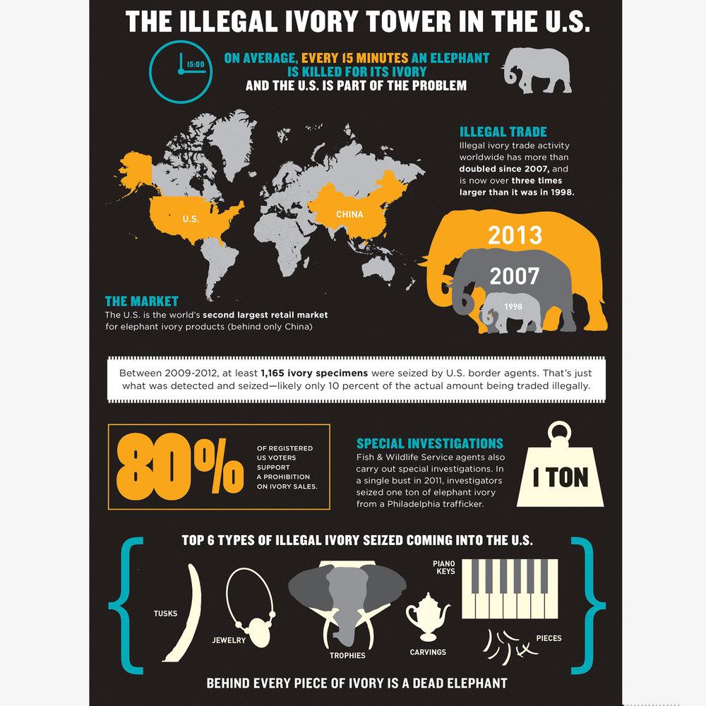 ivory_infographic.jpg