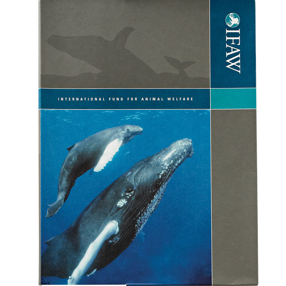whale-folder.jpg