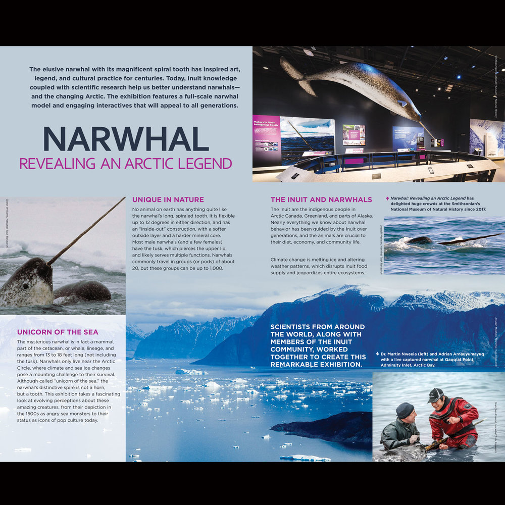 Narwhal: Revealing an Arctic Legend  – Exhibition Prospectus