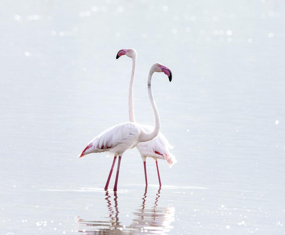 Flamingos_3730.jpg