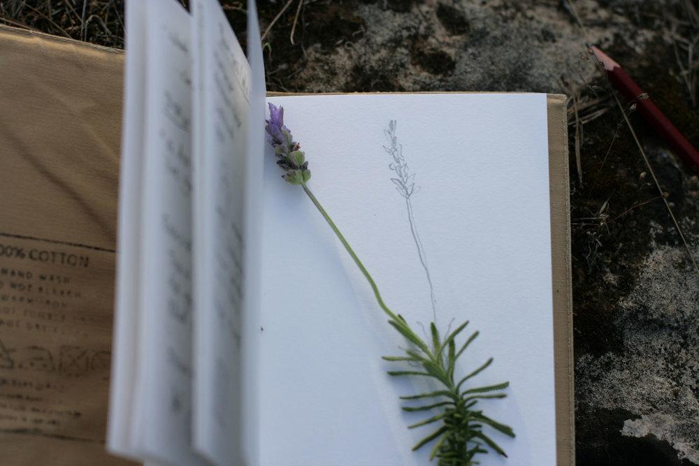 Sketchbook-nature-02.jpg