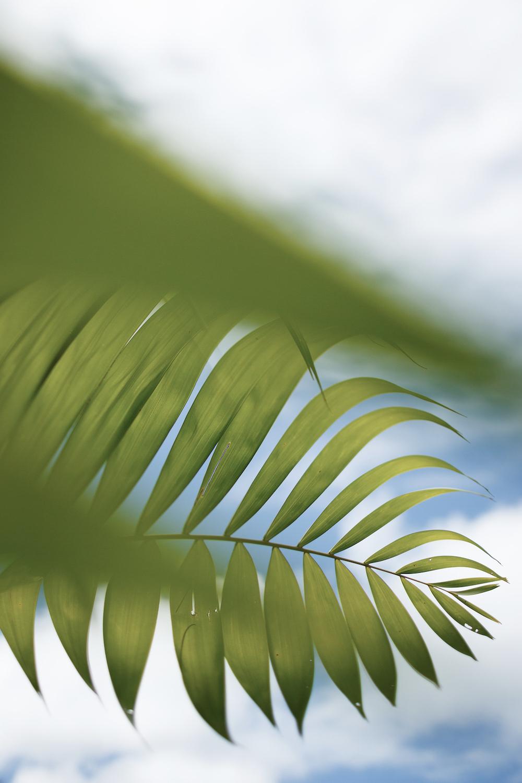 palmfrond.jpg
