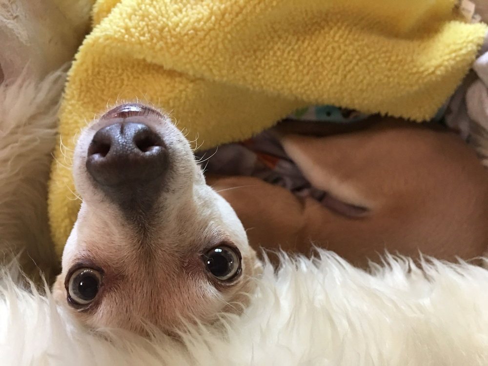 little-dog-upside-down.jpg