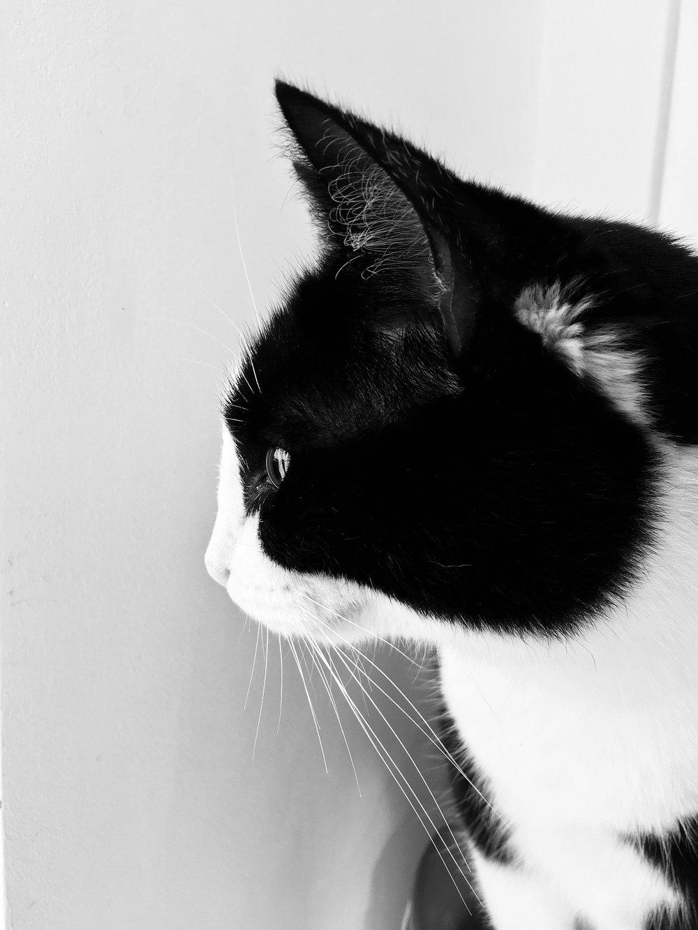 cat-3374409_1920.jpg