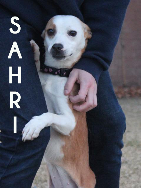 SAHRIFor More Information, please email or call:info@poundbuddies.org - ADOPTION HOURS: MON, WEDS, FRI 2 – 7PM & SAT 2 - 6PM