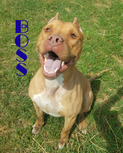 BOSSFor More Information, please email or call:info@poundbuddies.org - ADOPTION HOURS: MON, WEDS, FRI 2 – 7PM & SAT 2 - 6PM